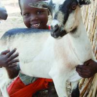 goat11-200x200